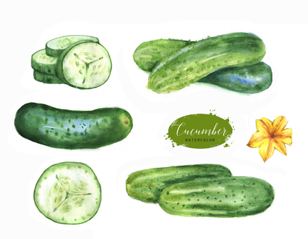 Hand drawn watercolor illustration set of fresh green cucumbers. Isolated on the white background. Vegetarian food product Reklamní fotografie - 100986244