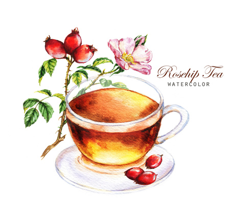 Hand-drawn watercolor illustration of the tea. Cup of the rosehip tea and dog-rose branch with flowers and fruits isolated on the white background.