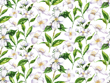 Hand-drawn watercolor seamless pattern with jasmine flowers and tea leaves on the white background. Repeated print 写真素材