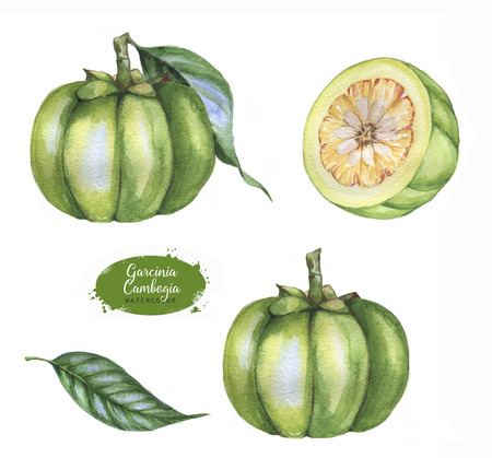 Hand drawn watercolor set of garcinia cambogia fresh fruit, isolated on white background. Healthy detox natural product superfood illustration Stock Photo