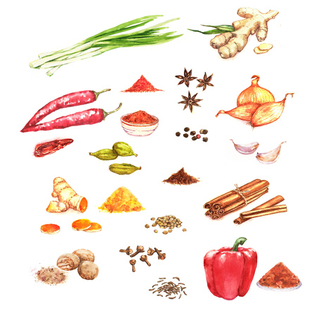 Watercolor hand drawn illustration with different spices: pepper, curcuma, onion, cardamom, ginger, anise