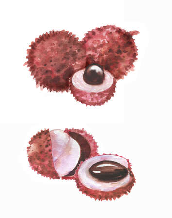 Hand drawn watercolor illustration of isolated litchi fruits on the white background. Super food Banque d'images - 104554570