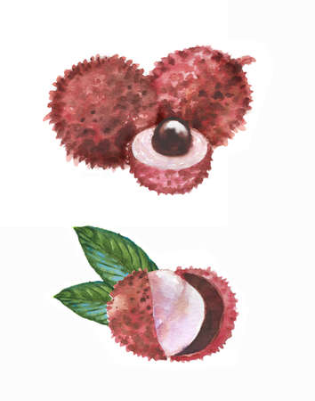 Hand drawn watercolor illustration of isolated litchi fruits on the white background. Super food Banque d'images - 104554572