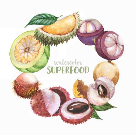 Hand drawn fresh fruits, watercolor Illustration set of super food exotic fruits: litchi, longan, rambutan, durian, mangosteen, garcinia cambogia Isolated on white background. Super food, exotic fruit