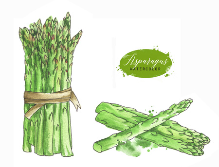 line art fresh green asparagus stems. Isolated eco food illustration on white background. Food Clip art. Hand drawn  painting healthy Vegan Food Design Stock Photo