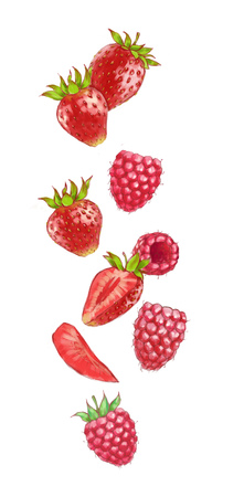 Hand drawn watercolor illustration of the different flying raspberry and strawberry isolated on the white background.