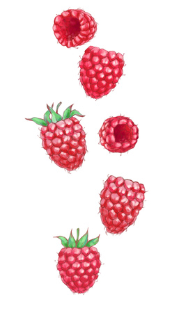 Hand drawn watercolor illustration of the different flying raspberry isolated on the white background.