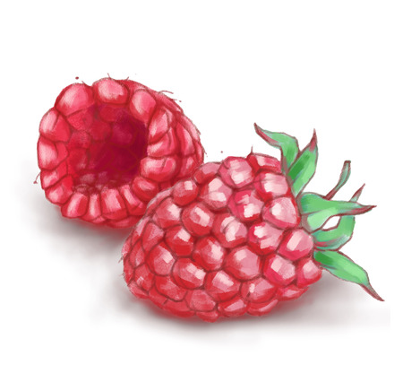 Hand drawn watercolor illustration of the healthy food. Raspberry isolated on the white background Reklamní fotografie