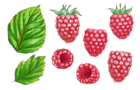 Hand drawn watercolor illustration of the healthy food. Set raspberry isolated on the white background Reklamní fotografie