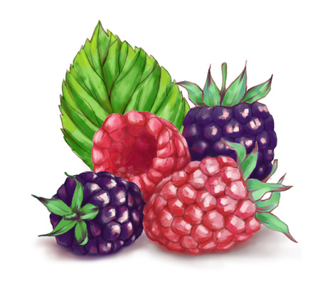 Hand drawn watercolor illustration of the food: ripe tasty blackberries and  raspberry isolated on the white background