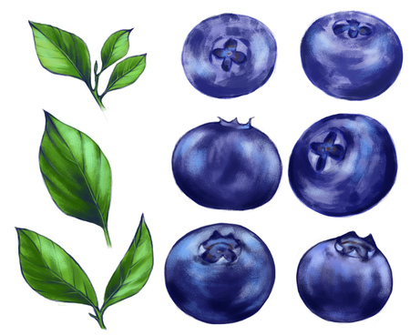 Hand drawn watercolor illustration set of the food: ripe tasty blueberries, isolated on the white background