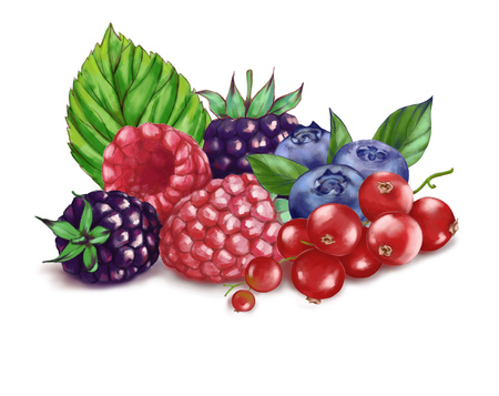 Hand drawn watercolor illustration of the food: ripe tasty red currant, blueberry, blackberries and raspberry isolated on the white background