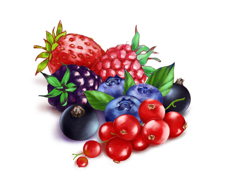 Hand drawn watercolor illustration of the food: ripe tasty red, black currant, blackberry, strawberry, raspberry and blueberries isolated on the white background Reklamní fotografie
