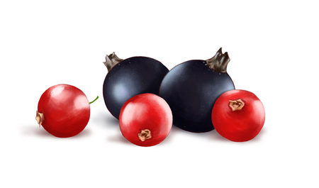 Hand drawn watercolor illustration of the food: ripe tasty red and black currants isolated on the white background
