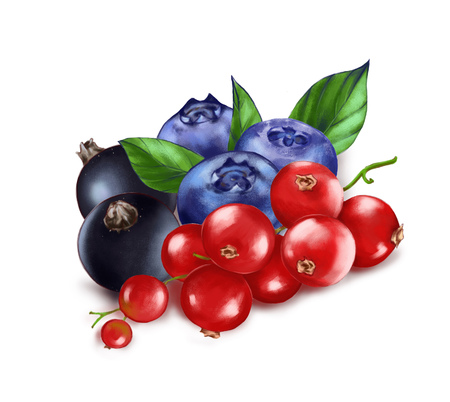 Hand drawn watercolor illustration of the food: ripe tasty red, black currants and blueberries isolated on the white background Reklamní fotografie