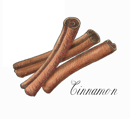 Hand drawn watercolor cinnamon sticks isolated on the white background. Food illustration Stok Fotoğraf