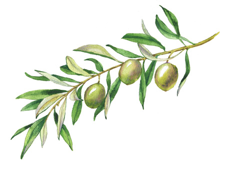 Hand drawn watercolor illustration with green olives and olive branch Reklamní fotografie