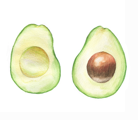 Watercolor hand drawn illustration with fresh green avocado on the white background. two slices