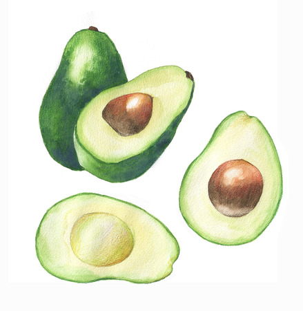 Watercolor hand drawn illustration with fresh green avocado on the white background Reklamní fotografie