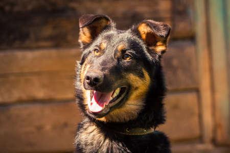 watchdog: watchdog