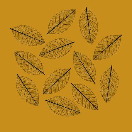 venation: Illustration of Leaf Skeletonization