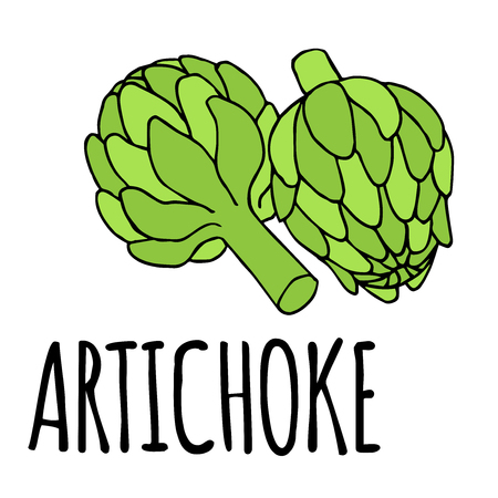 artichoke: vector doodle illustration of artichoke, organic vegan background, healthy food Illustration