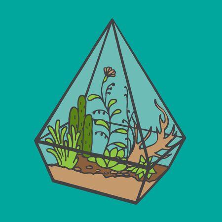 terrarium: Vector glass polygonal terrarium  with succulent plants, grass and flowers, doodle sketch garden under glass