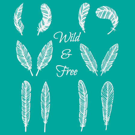 feathering: hipster feather elements, vintage doodle outline feather vector Illustration