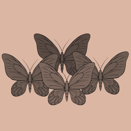 insecta: Big realistic collection of colorful butterflies. Summer flying insects set for greeting cards and  scrapbook Illustration