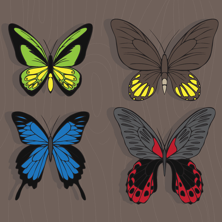 insecta: Big realistic collection of colorful butterflies. Ornithoptera croesus and goliath, papilionidae rumanzovia and ulysses, summer flying insects set for greeting cards and  scrapbook