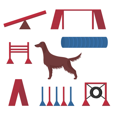 Irish setter in a dog show, competition items hoop, tunnel and pipes