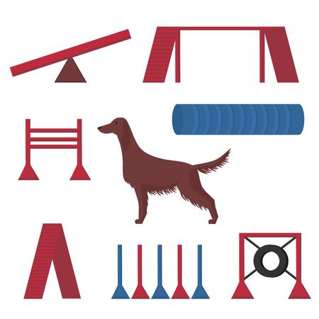 Setter irlandés en un show canino, aro de artículos de competición, túnel y tuberías