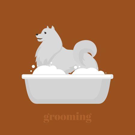 samoyed: Samoyed dog in bath. Lovely puppy in the bathroom