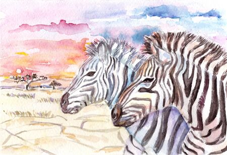 Watercolor illustration with two zebras Stock Photo