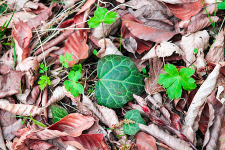 A bright green leaf lies among the fallen dry foliage. Beautiful autumn background