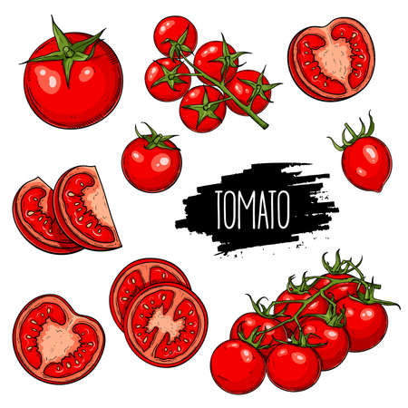 Hand drawn set of tomatoes, whole and sliced.