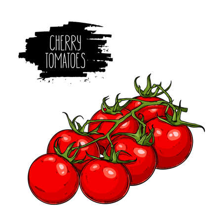 Isolated branch of cherry tomatoes. Natural vegetable vector sketch illustration. Vettoriali