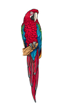 Hand-drawn isolated red macaw. Green-winged ara parrot on a branch. Vector illustration.