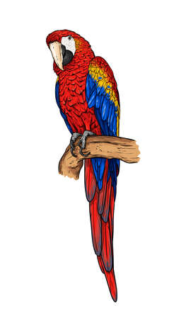 Hand-drawn isolated macaw on a branch. Red ara parrot vector illustration. Illusztráció