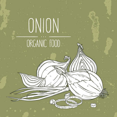 Hand drawn onion, rings, halves, pieces and green onion. Natural vegetable vector sketch illustration.