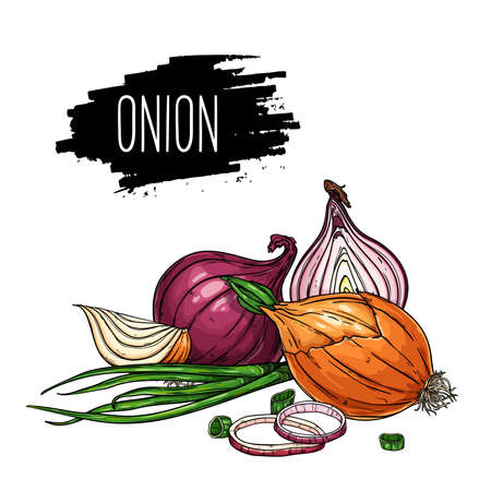 Hand drawn isolated onion, rings, halves, pieces and green onion with label. Natural vegetable vector sketch illustration. Vettoriali