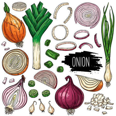 Hand drawn vegetable set of onion, slices, halves, pieces, green onion and leek. Vegetable isolated on white background with label. Vector sketch illustration.