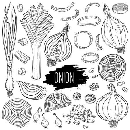 Hand drawn onion set. Isolated bulb, slices, halves, pieces, green onion and leek. Vegetarian food design for shop, book, menu, poster, banner. Outline ink slyle sketch. Vector coloring illustration. Illusztráció