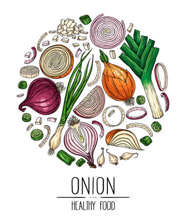 Hand drawn vegetable set of isolated onion, slices, halves, green onion and leek arranged in a circle. Vegetarian food design for shop, book, menu, poster, banner. Vector sketch illustration.