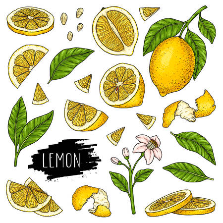 Hand drawn set of lemon, slices pieces, half, flower, seed and leaves isolated on white background with label. Design for shop, market, book, menu, poster, banner. Vector sketch illustration