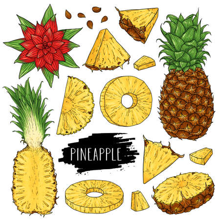 Hand drawn tropical set of whole pineapple, slices pieces, half, flower and seed isolated on white background with label. Design for shop, market, book, menu, poster, banner. Vector sketch illustration