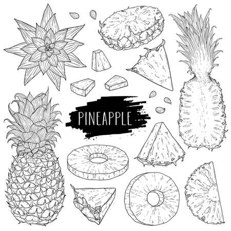 Pineapple set. Hand drawn whole pineapple, slices pieces, half, flower and seed. Design for shop, book, menu, banner. Healthy food ingredient. Outline ink style sketch. Vector coloring illustration.  イラスト・ベクター素材