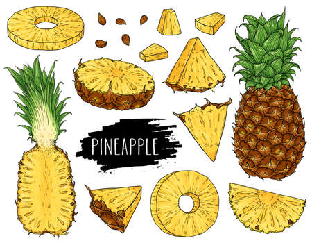 Hand drawn natural tropical set of whole pineapple, slices pieces, half and seed isolated on white background with label. Design for shop, market, book, menu, poster, banner. Vector sketch illustration  イラスト・ベクター素材