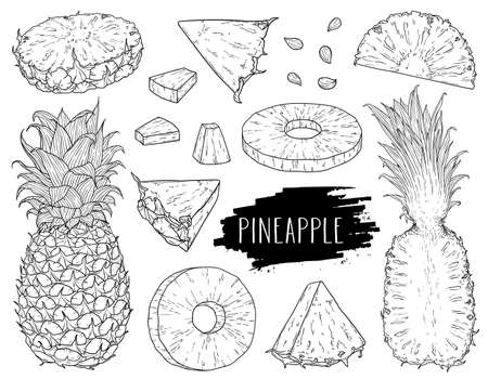 Natural tropical pineapple set. Hand drawn whole pineapple, slices pieces, half and seed. Design for shop, book, menu, banner. Outline ink style sketch. Vector coloring illustration.