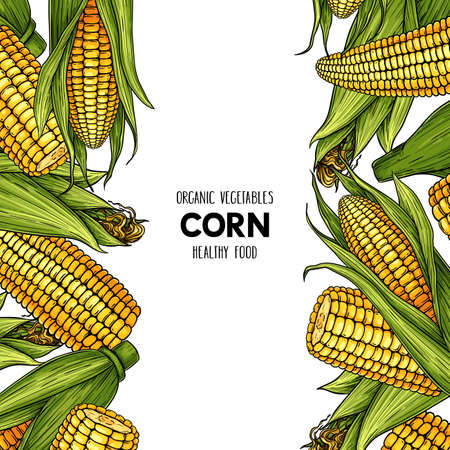 Vector hand drawn frame with organic corn cobs. Natural cereal illustration